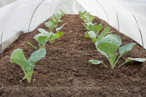 Comment protéger vos plantes de l'hiver ? Par notre voile d'hivernage !