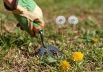 Conseils pour avoir un beau jardin