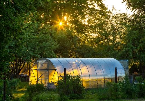 4 bonnes raisons d'avoir une serre dans son jardin