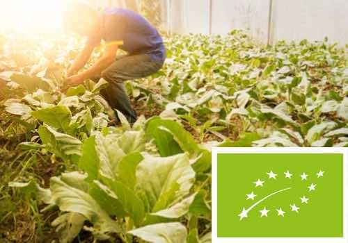 Le film de paillage biodégradable peut-il être utilisé en agriculture biologique ?